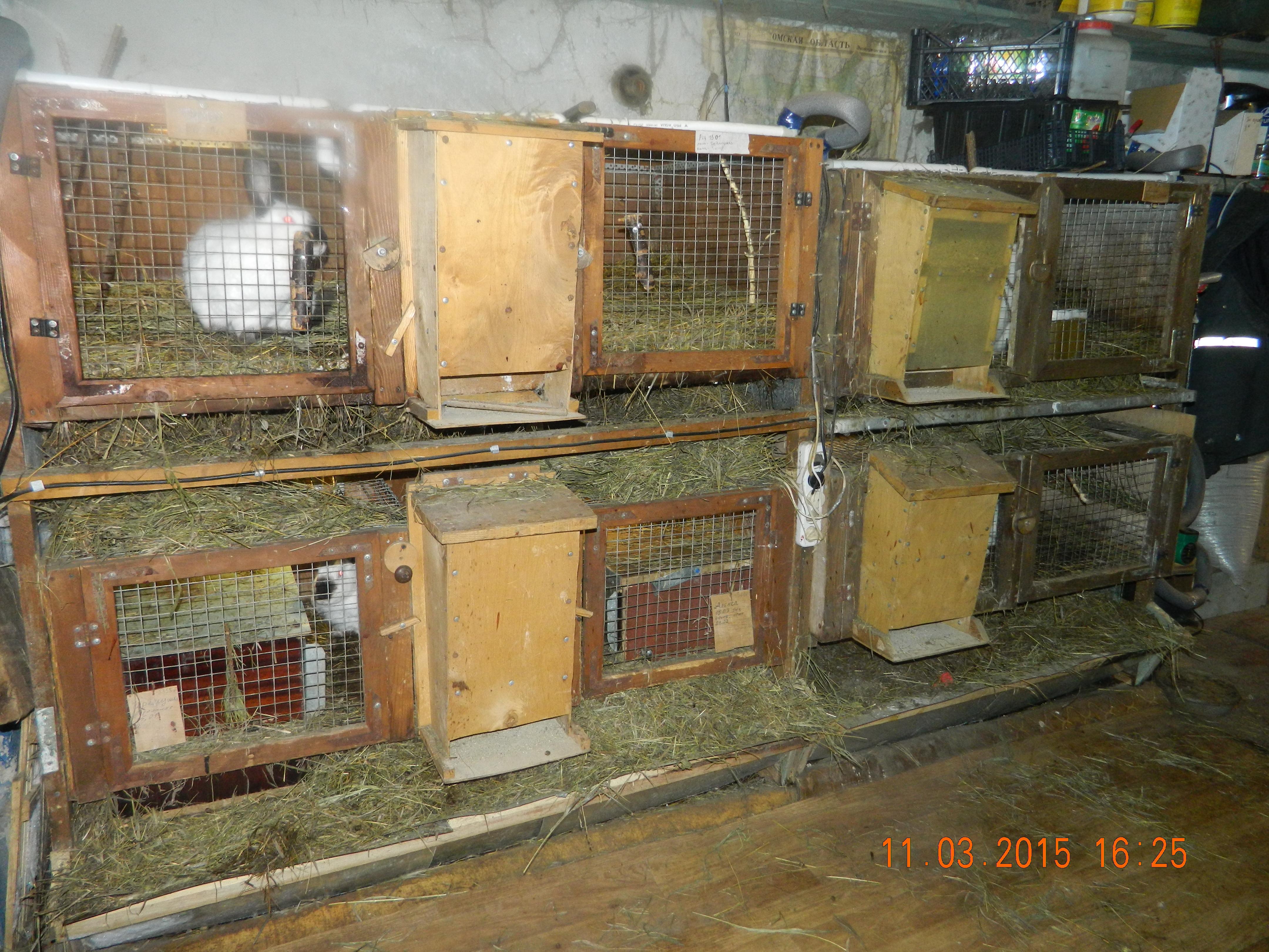 Кролики в железном гараже купить гараж на фабрициуса