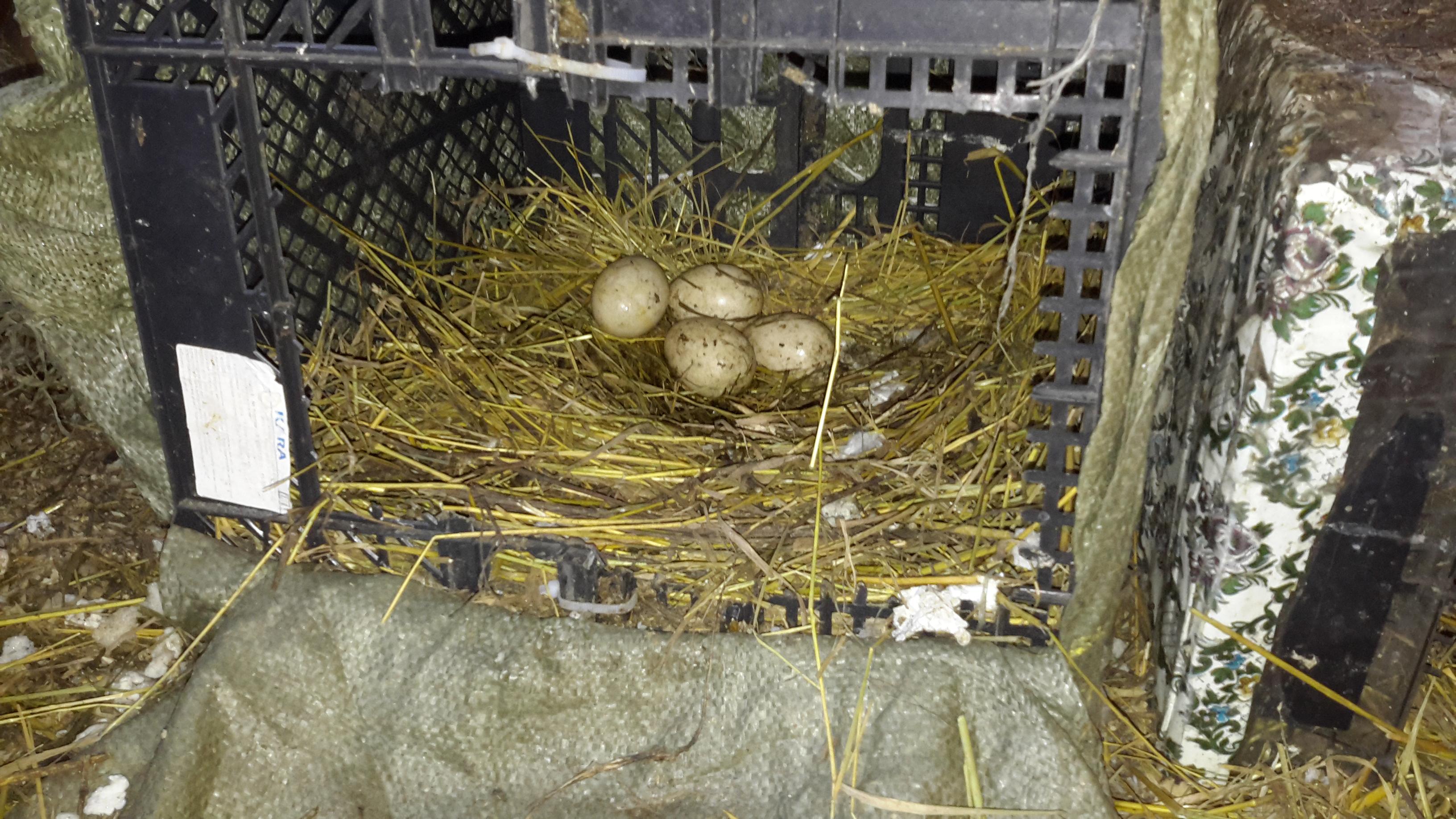 Как сделать гнездо для уток фото 330