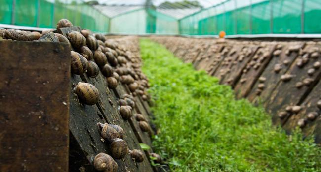 picturesnail-farm1256p0.jpg