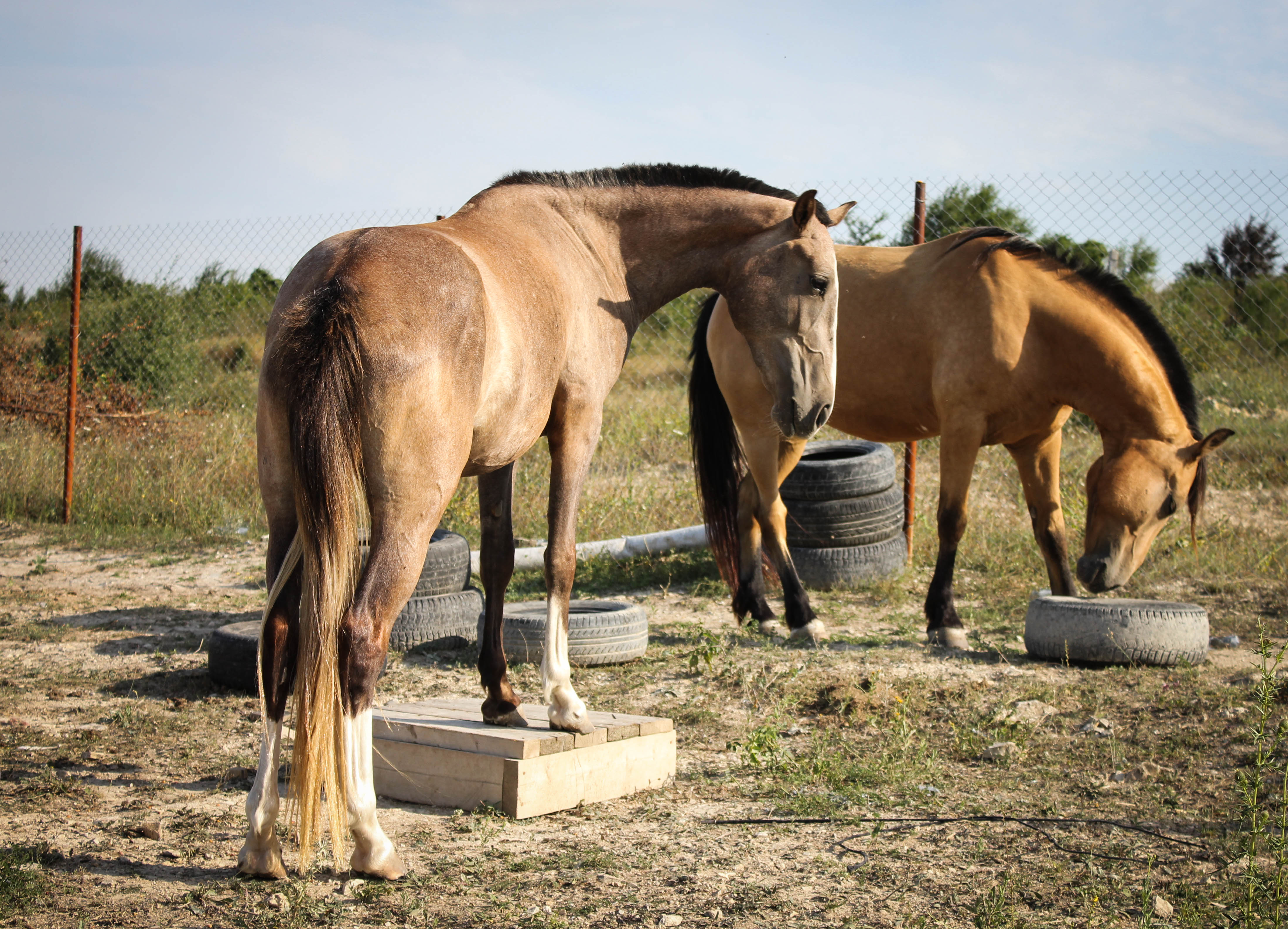 Как сделать кормушку для лошади фото 156