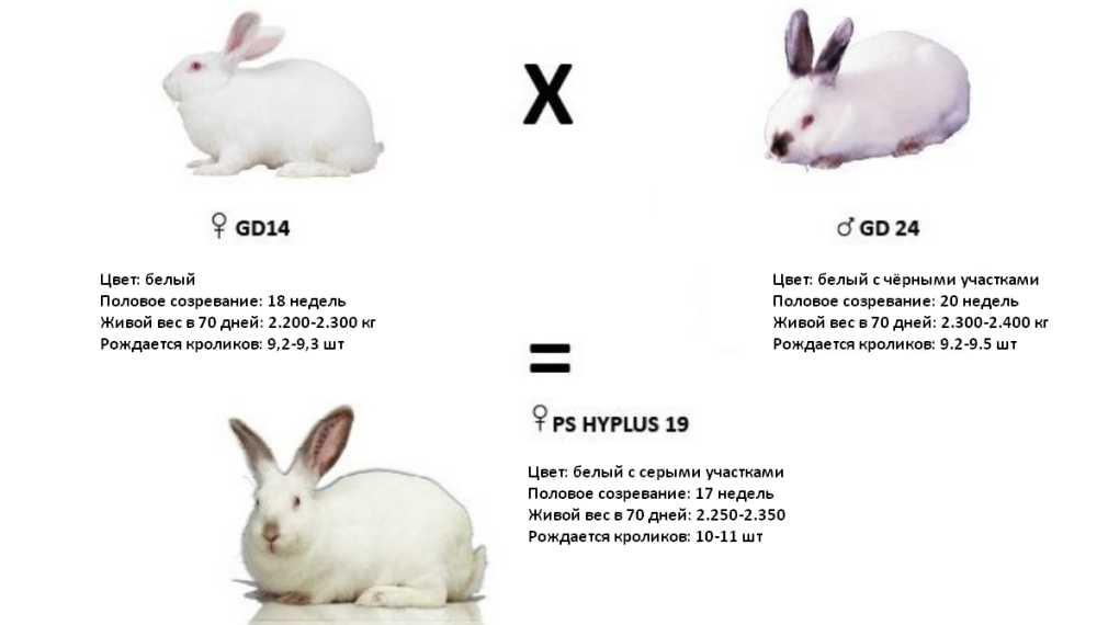 hyplus19.jpg