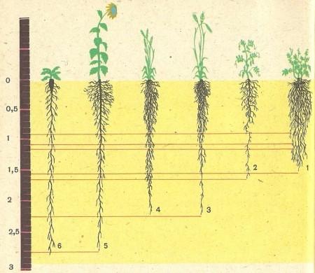 b6d98a0ad8674f3a48a1721c1e1fceaei-29.jpg