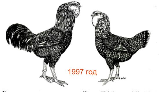 orlovskiekury.jpg