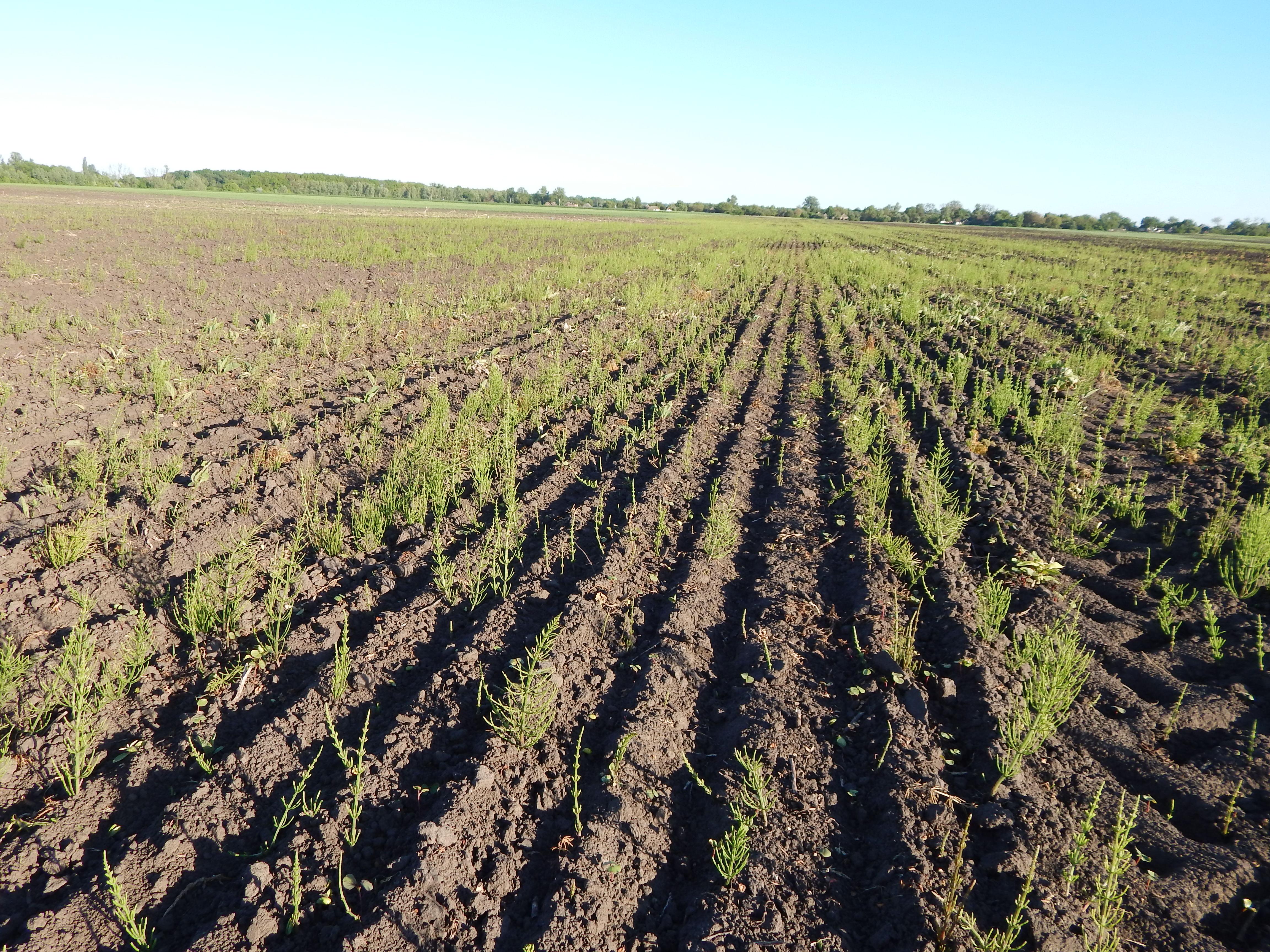 Выращивание сои урожайность 55