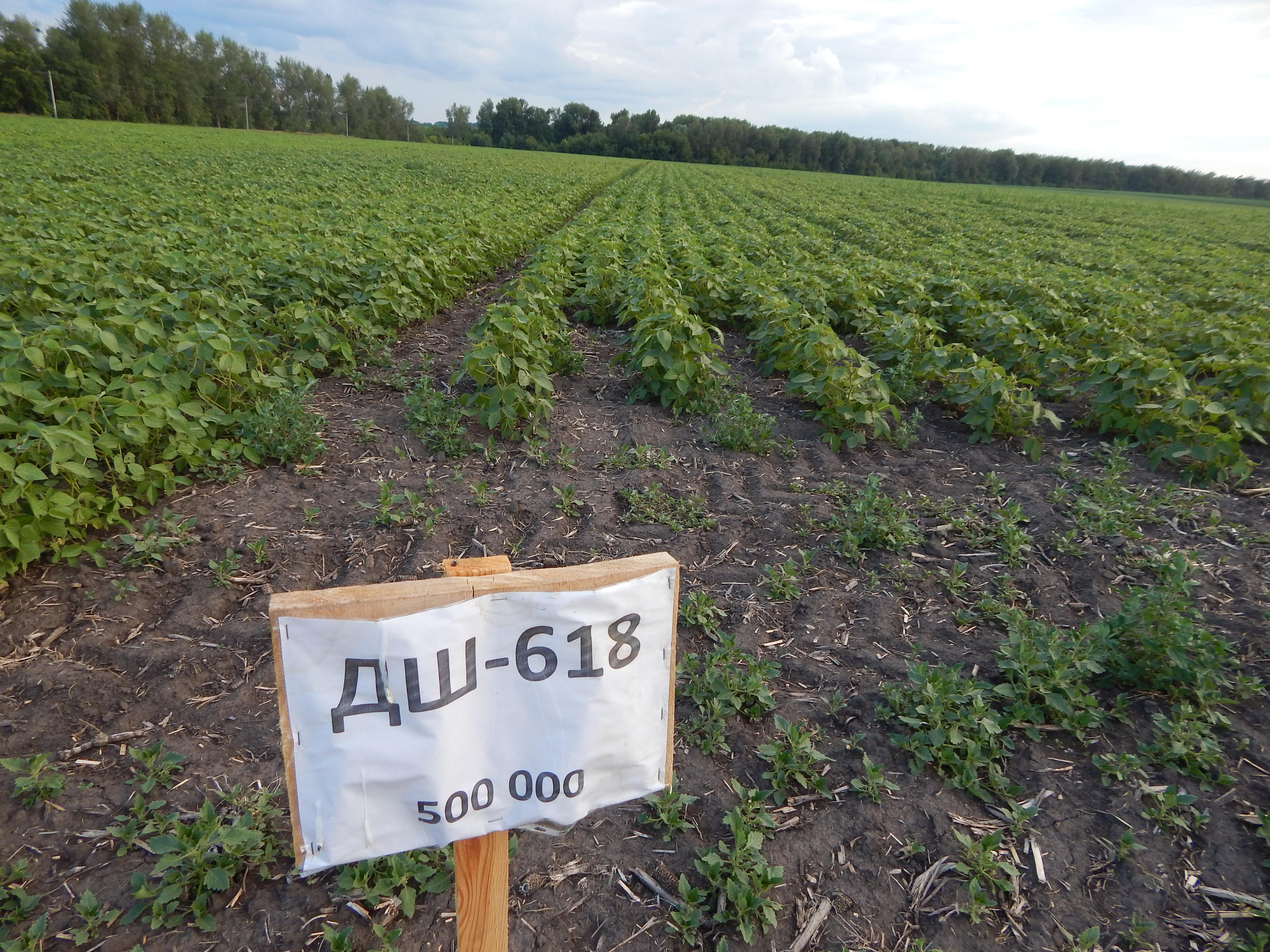 Выращивание сои по нулевой технологии 98