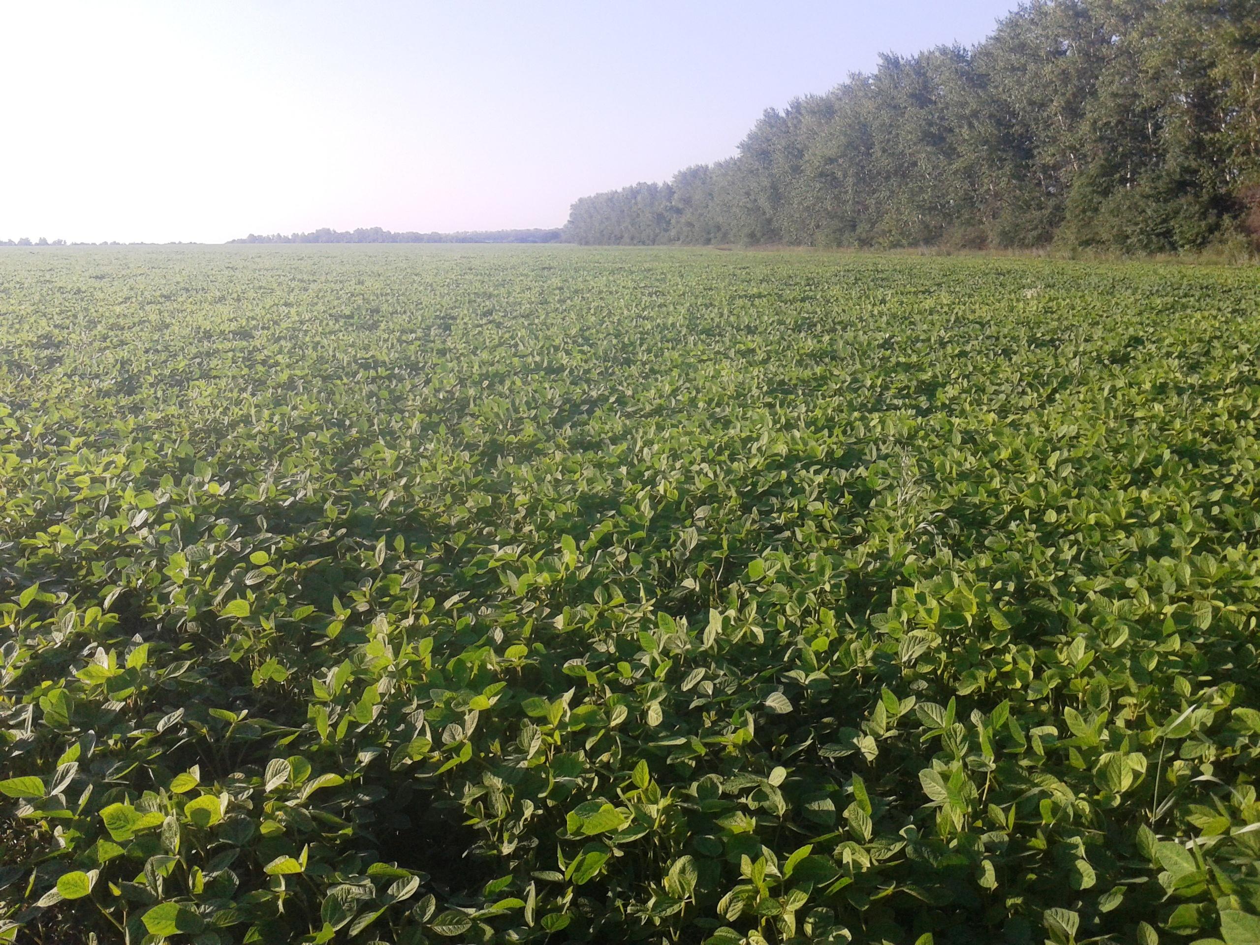Выращивание сои урожайность 45