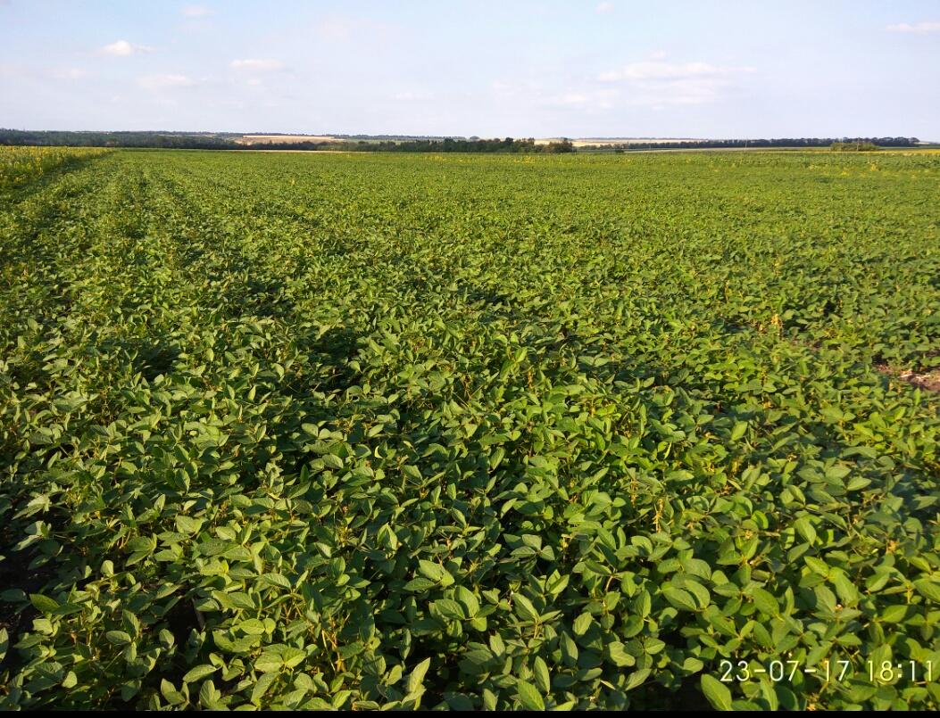 Выращивание сои урожайность 56