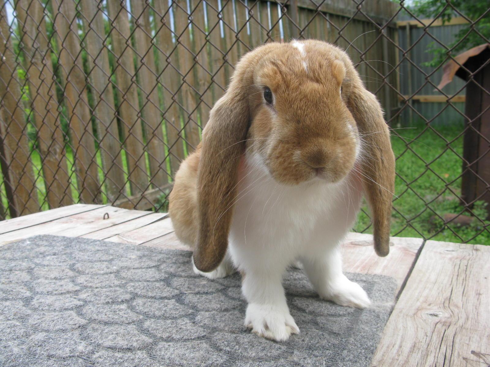 Картинки кроликов с породой