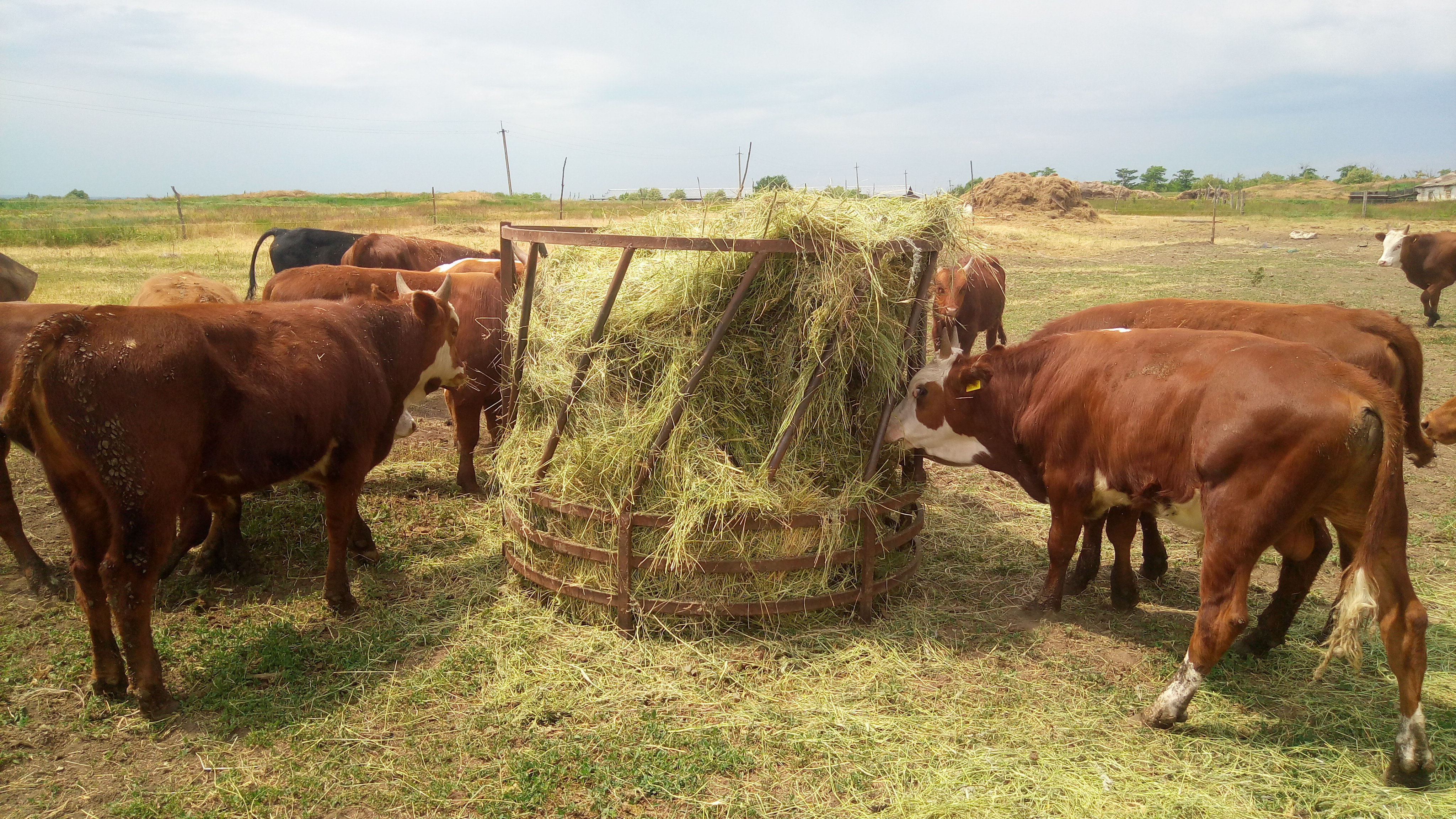 кормушка для коровы своими руками фото раз