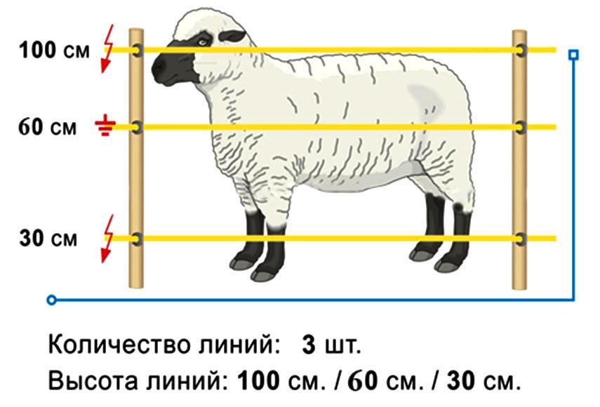 shemaovci100-60-30.jpg