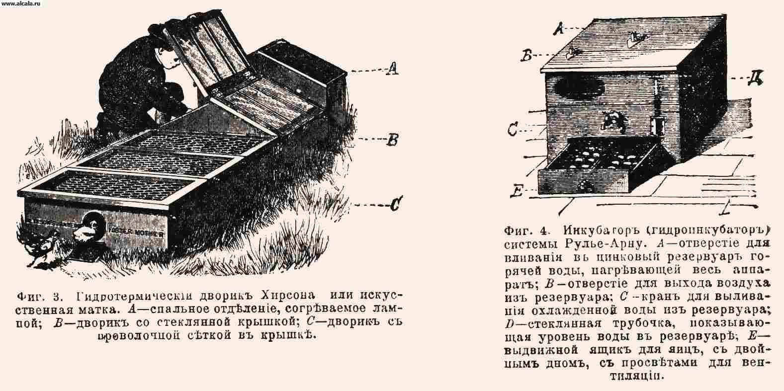 Птицеводство. Гидротермический дворик Хирсона или искусственная матка
