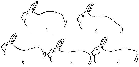 Особенности организма кроликов