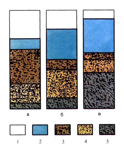 Объем воздуха, воды и других составных частей в разных видах почв: 1 — воздух, 2 — вода, 3 — грубый песок, 4 — мелкий порошкообразный песок, 5 — частицы ила; а) почва песчаная, 6) почва глинистая, в) почва илистая