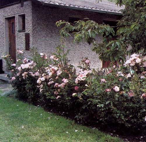 Розарий прямоугольной формы гармонирует с архитектурой дома