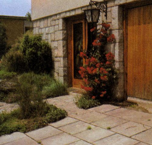 Вьющаяся роза может быть основным элементом украшения у входа в дом