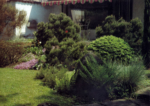 На снимке видно, как многолетники могут дополнить и оживить группу древесных насаждений. Для этого используют как низкорослые многолетники (вплоть до ковровых посадок), так и декоративные злаковые травы и разные виды папоротников. В целом композиция выглядит красиво и естественно