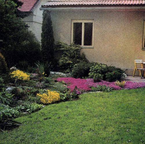Красиво цветущие весенние многолетники обрамляют участок, выделяясь на фоне свежей зелени газона в уголке для отдыха у самого дома. Особенно красивы желтый алиссум (Alyssum saxatile 'Compactum') и красные и розовые ползучие флоксы (Phlox subulata)