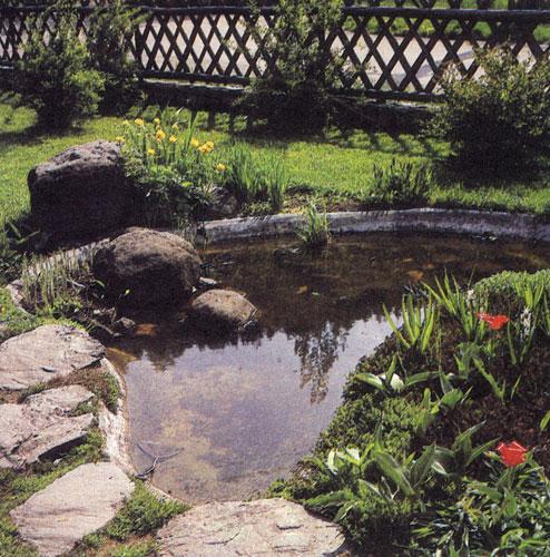 Водоемы различных размеров и очертаний — важная составная часть садовой композиции. Водяные и болотные растения обогащают сортимент цветочных культур видами, отличающимися красивыми формами и необычным ростом, формой листьев и цветов. Вблизи водоемов выращивают огромное количество интересных многолетников, в частности купальницу (Trollius), расцветающую в мае—июне