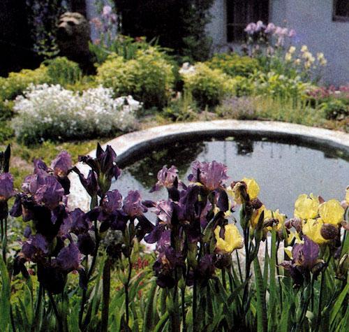 Ирис (Iris×barbata) — очень красивый многолетник, пригодный для рабаток, групповых посадок и посадок на небольших массивах. Расцветка цветов ирисов весьма разнообразна; такое разнообразие цветовой гаммы цветков не встречается ни у одного многолетника. Каждый сорт достигает соответствующей высоты. Ирис расцветает в зависимости от сорта с мая до июня. Ирисы прекрасно растут с многолетниками, которые любят сухую почву