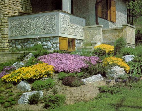 Яркая окраска весенних многолетников, посаженных около дома, непрерывно меняется, создавая вокруг атмосферу весенней свежести. Особенно красивы ковры низкого ползучего флокса (Phlox subulata) и большие кусты алиссума (Alyssum saxatile), усыпанные цветами