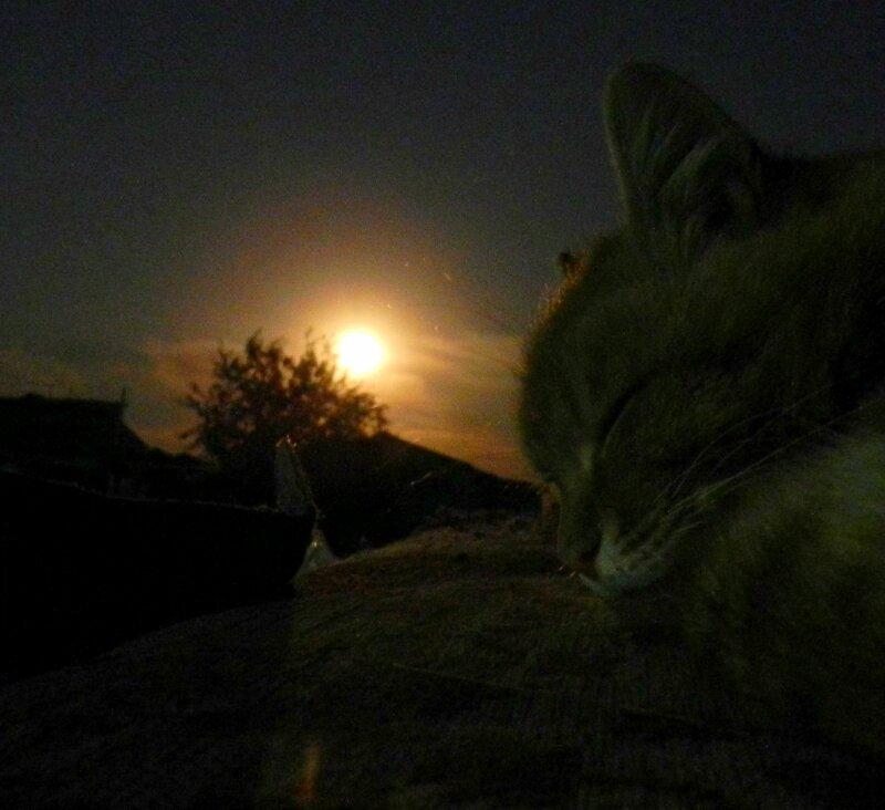 """Лунный Кот или """"Кошачьи уши"""""""
