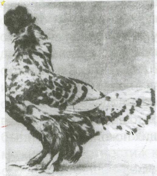 ПАВЛОВСКАЯ СЕРЕБРИСТАЯ ФОТО ВОЗМОЖНО  1906 года