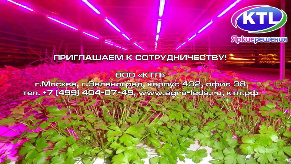 Фитолампы KTL