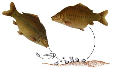 Инфекционные болезни аквариумных рыб и их классификация